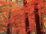 autumn_Trees_GA164
